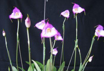 2010uniflora